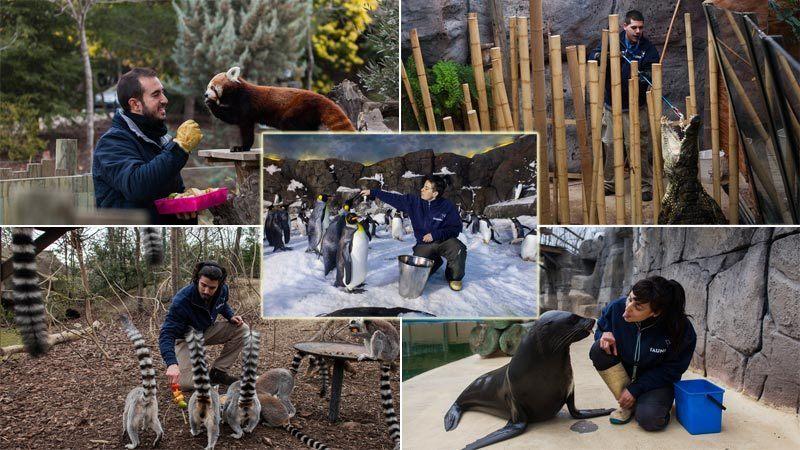 Curso-Cuidador-de-Animales-en-Zoológicos-temario-requisitos-precio