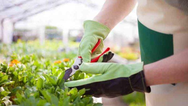 Cursos-de-técnico-en-Jardinería-Floristería-requisitos-temario-precios