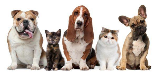 Cursos-de-Peluquería-Canina-requisitos-temario-precios