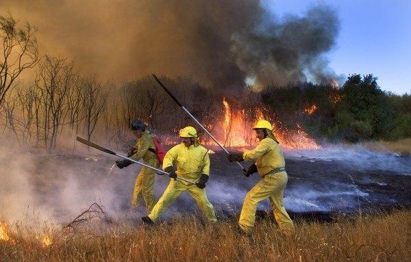 requisitos-para-ser-bombero-forestal
