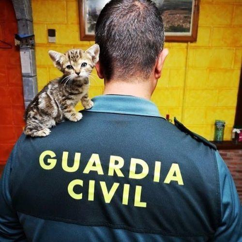 Guardia Civil con gato