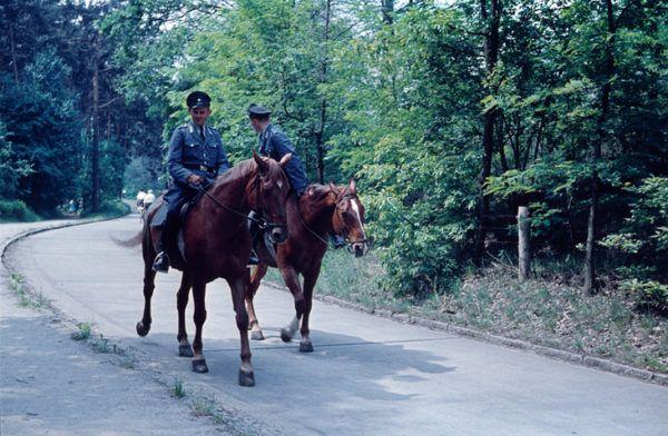 Oposiciones medio ambiente 2022 policia a caballo por bosque