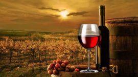 Máster en Viticultura, Enología y Dirección de Empresas Vitivinícolas