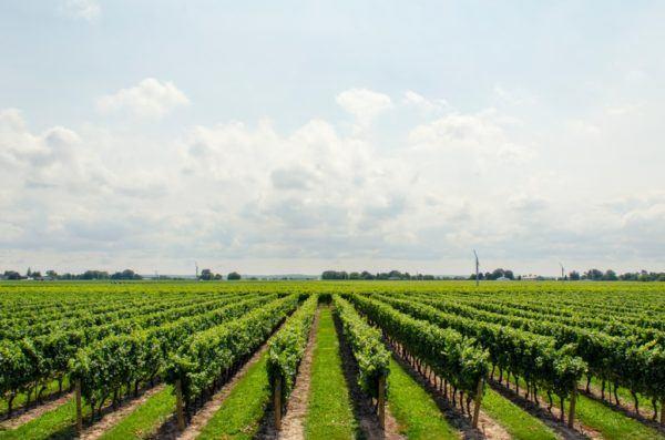 master-en-viticultura-enologa-y-direccin-de-empresas-vitivinicolas-viniedos