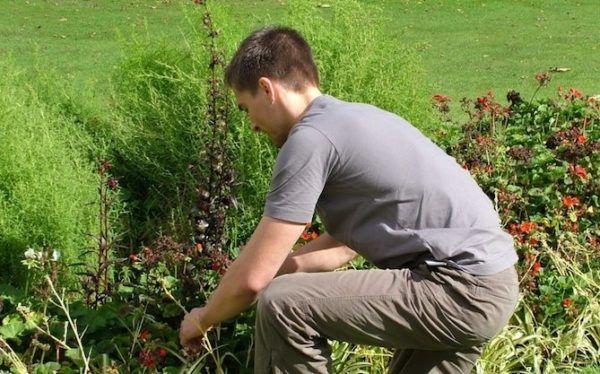 cursos-jardinero