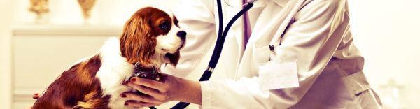 master-en-animales-de-compañia-perro