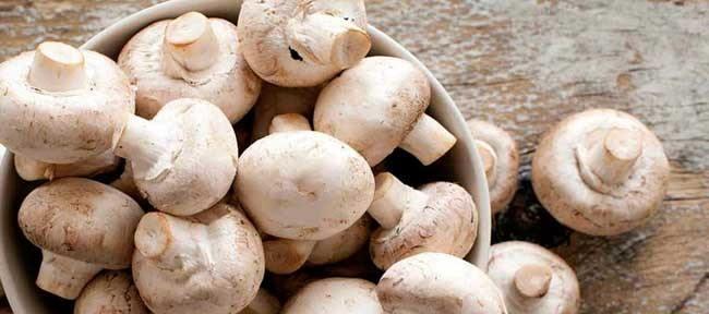 Curso-de-Cultivo-de-hongos-Comestibles