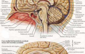 Curso de Osteopatía craneal