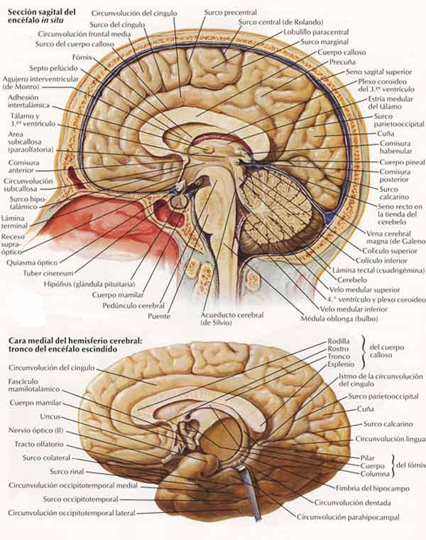 Curso de osteopatia