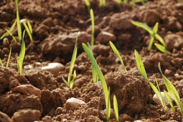 Fertilidad del-Suelo-Cursos-de-Fertilidad-del-suelo-requisitos-temario-precio