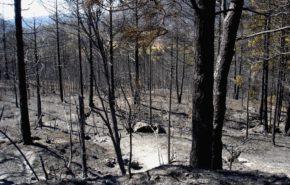 Técnico superior en Gestión forestal y del medio natural