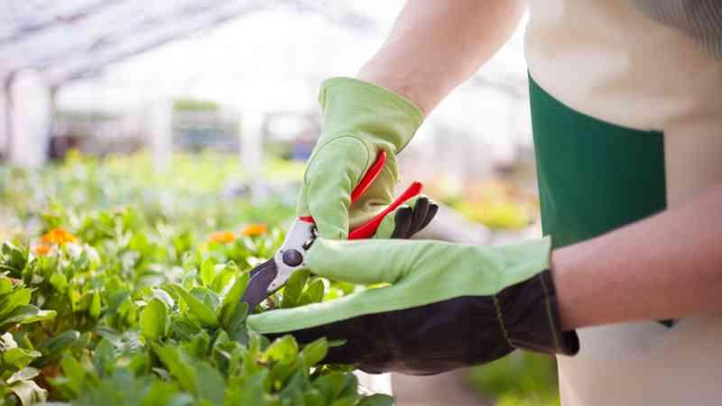 Cursos de t cnico en jardiner a y florister a 2018 for Aprender jardineria