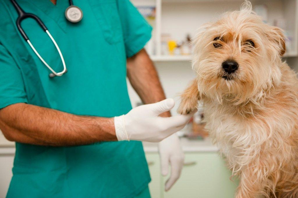 master-en-animales-de-compañía-requisitos-temario-precio-perro-gato
