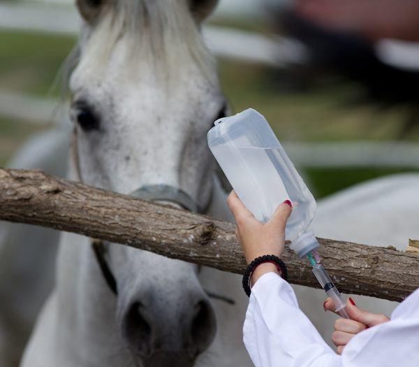 master-en-animales-de-compañía-requisitos-temario-precio-perro-gato-caballo