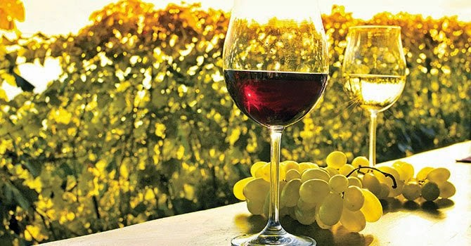 Estudio-el-vino-Postgrado-en-Enología-Técnica-requisitos-temario-precio
