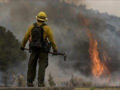 Requisitos para ser bombero forestal