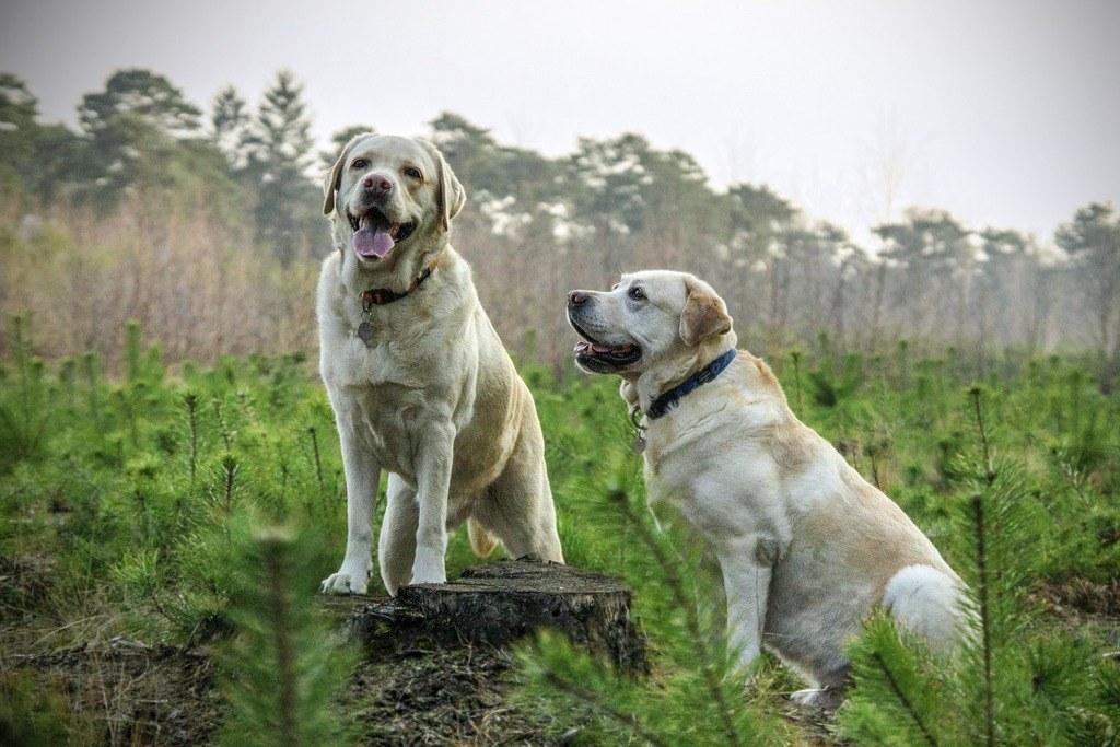 Cursos-gratuitos-para-trabajar-con-animales