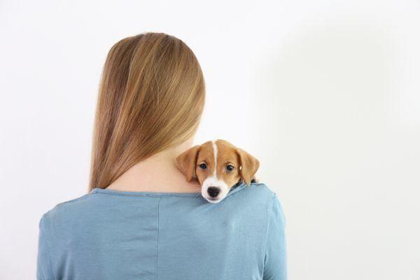 aplicaciones-para-cuidadores-de-perros-istock