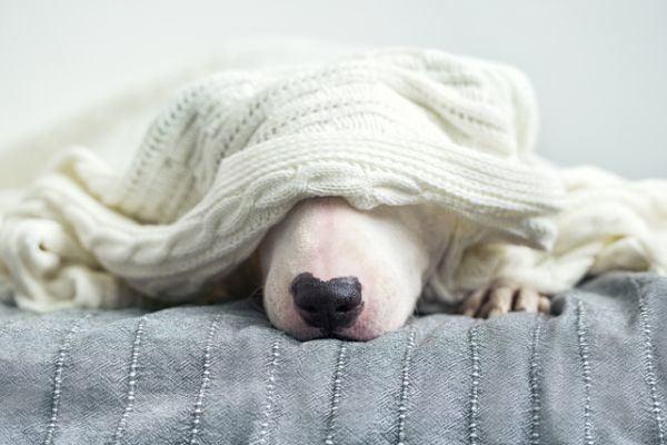 cuanto-gana-un-cuidador-de-perros-istock1