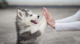 ¿Cuánto puede ganar un cuidador de perros en 2019?
